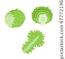 Simple vector illustration of lettuce 67772196