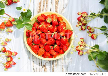 草莓採摘草莓屋 67780910