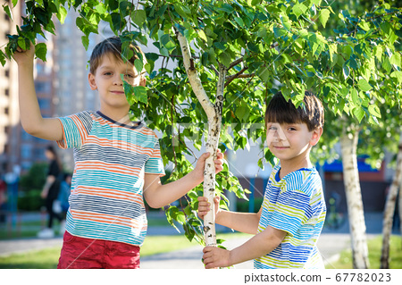 Two boys play near Birch tree buds kids has 67782023