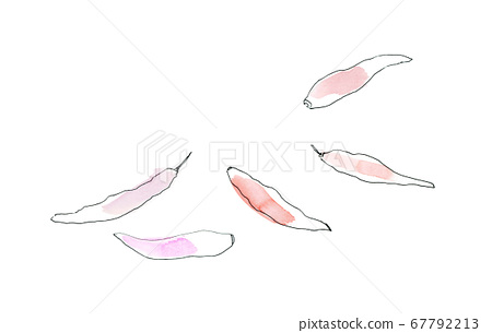 Illustration of simple and fashionable chili pepper drawn with lines and watercolor 67792213