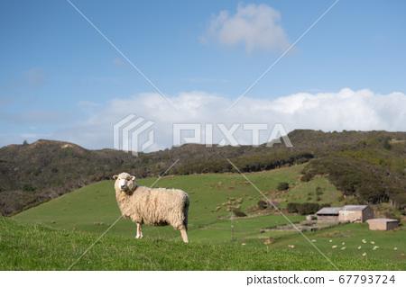 一隻羊 67793724