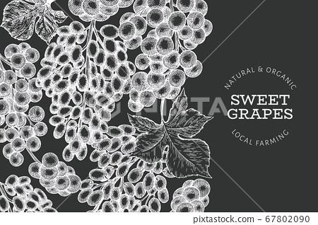 Grape design template. Hand drawn vector grape 67802090