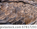 Closeup texture of brown eagle 67817293