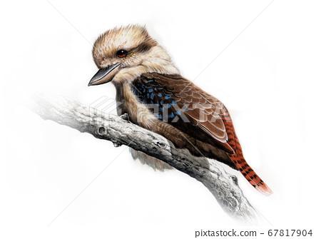 野鳥縮影Warai翠鳥 67817904