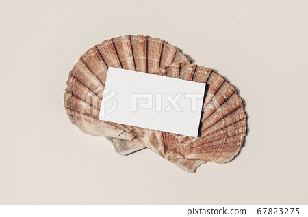 Modern summer stationery still life. Blank business card mock up scene with pink oyster sea shells. Beige table background. Flat lay, top view. Vacation, ocean concept. 67823275