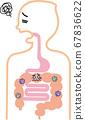 胃腸道有很多有害細菌 67836622