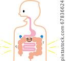 健康人的胃腸道 67836624