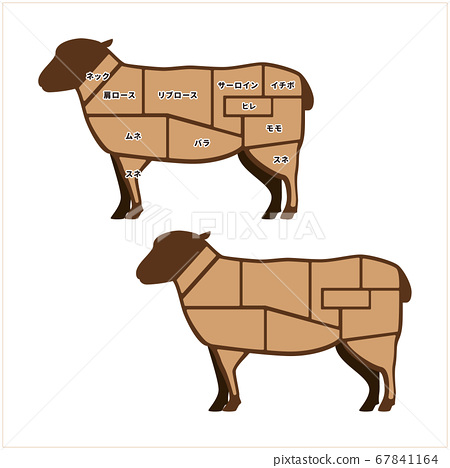 Lamb meat illustration 67841164