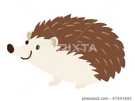 Hedgehog illustration 67841685