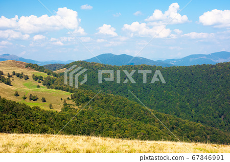 beech forest on the hills. wonderful landscape of 67846991