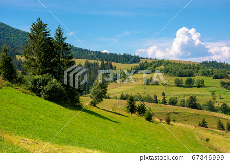 rural fields on a sunny summer day. trees on the 67846999