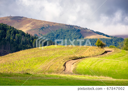 grassy meadow on a sunny day in mountains. 67847002
