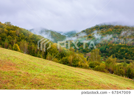 forest on mountain in mist at sunrise 67847009