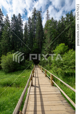 wooden bridge above the creek among the trees. 67847021