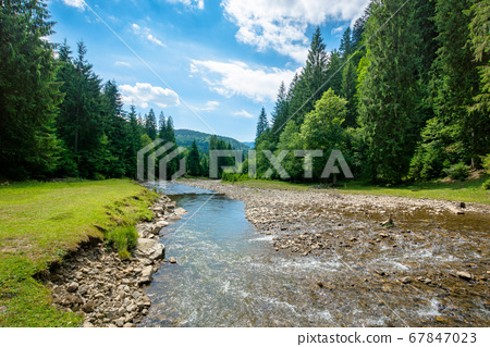 mountain river among the forest in valley. sunny 67847023
