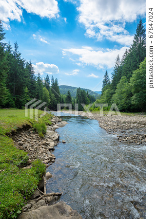 mountain river among the forest in valley. sunny 67847024