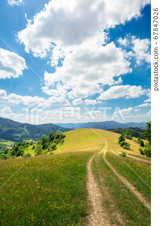 rural landscape on a summer day. dirt road in the 67847026