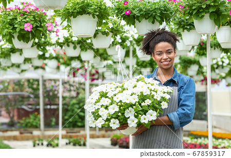 Florist and flowering plants. Woman farmer in apron holds white flowers in hands 67859317