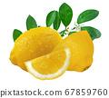 Lemon fruit isolated on white background 67859760