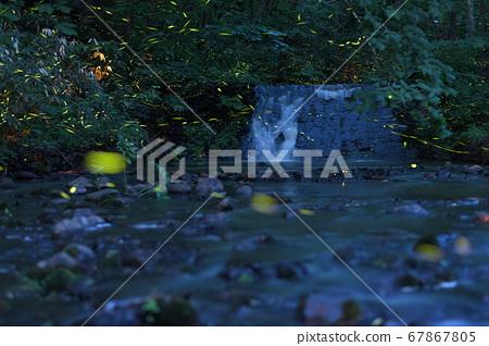 在西岡公園的水邊跳舞的海克螢火蟲 67867805
