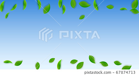 Falling green leaves. Fresh tea neat leaves flying 67874713