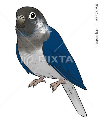 Uroko長尾小鸚鵡 67876956