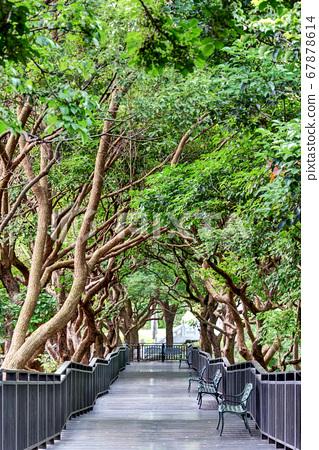 Wooden pathway  67878614