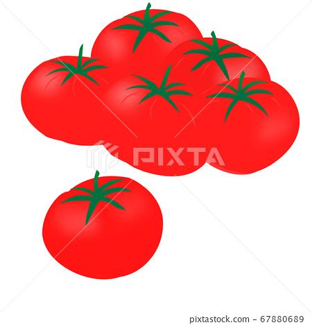 Tomato (vector illustration of sweet potato) 67880689