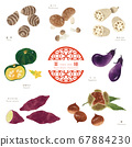 Autumn medicine set / hand-drawn illustration of ingredients 67884230