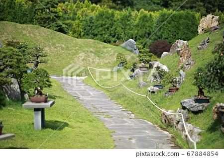 思南1004岛盆景公园 67884854