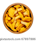 Fresh chanterelles in a wooden bowl. Cantharellus, popular edible mushrooms with intense yellow color. One of most recognized and harvested groups of edible mushrooms. Close-up from above, food photo. 67897886