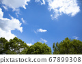 蓝天和树木 67899308