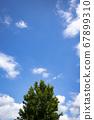 蓝天和树木 67899310
