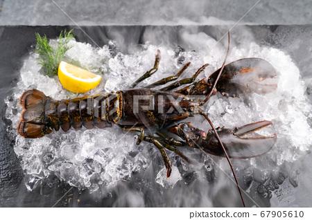 Freash raw lobster 67905610