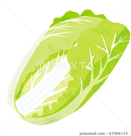 中國的白菜 67906174