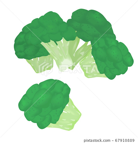 Broccoli (vector illustration of sweet potato) 67910889