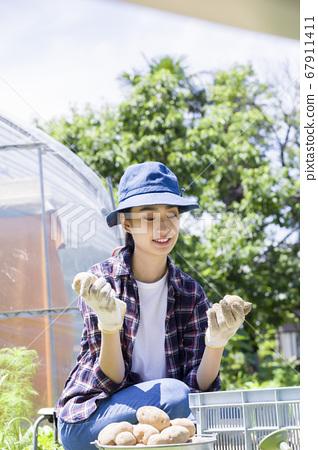수확 한 감자를 선별하는 젊은 여성 텃밭 이미지 67911411