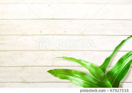 Tropical leaves 67927538