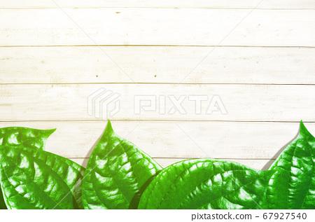 Tropical leaves 67927540