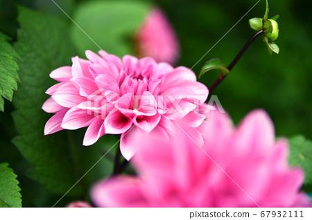 Summer flowers 67932111