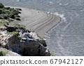 Pinguino sulle rocce a Caleta Valdez 67942127