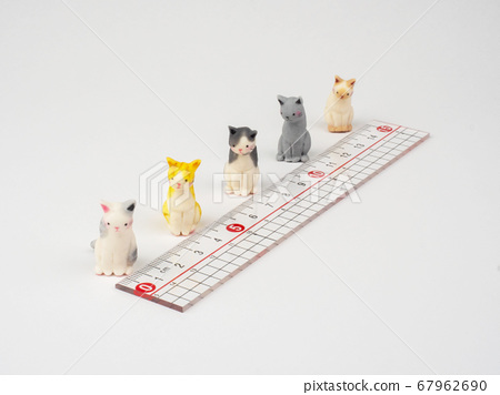 Small cats lined up to protect social distance 67962690