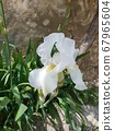 꽃 67965604