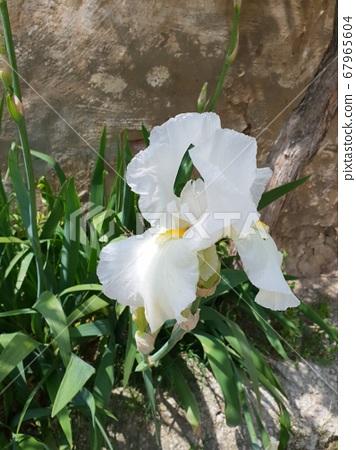 Flower 67965604
