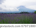 薰衣草田和富士山 67971880
