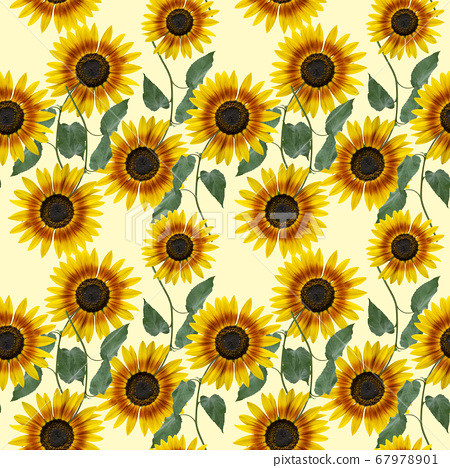 Seamless floral design with sunflowers for 67978901