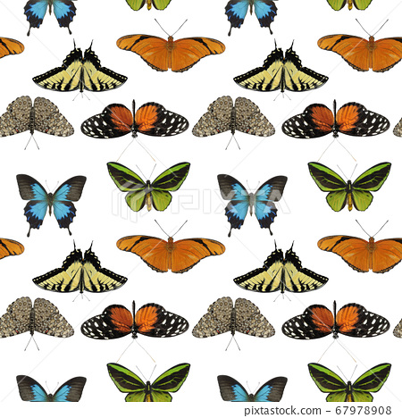 seamless pattern with butterflies on white 67978908