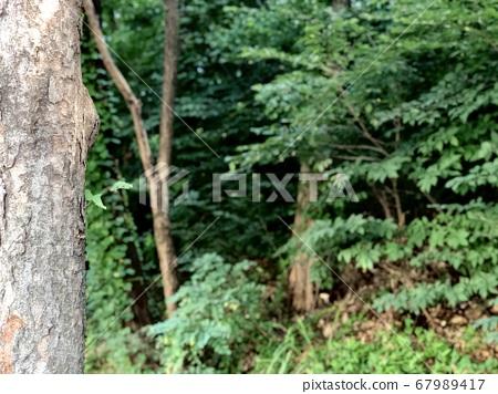 나무와 숲 67989417