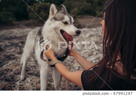 Beautiful girl plays with a dog grey and white 67991297