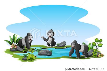 Gorillas around the small pond 67991333